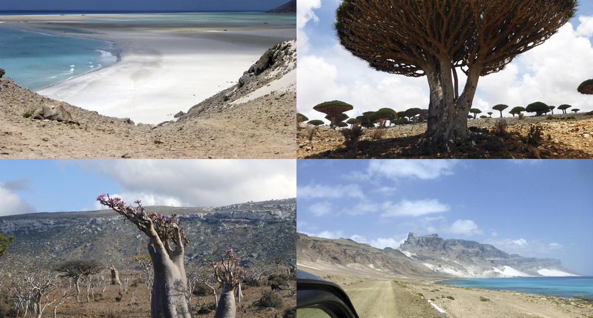 Socotra Island Tour
