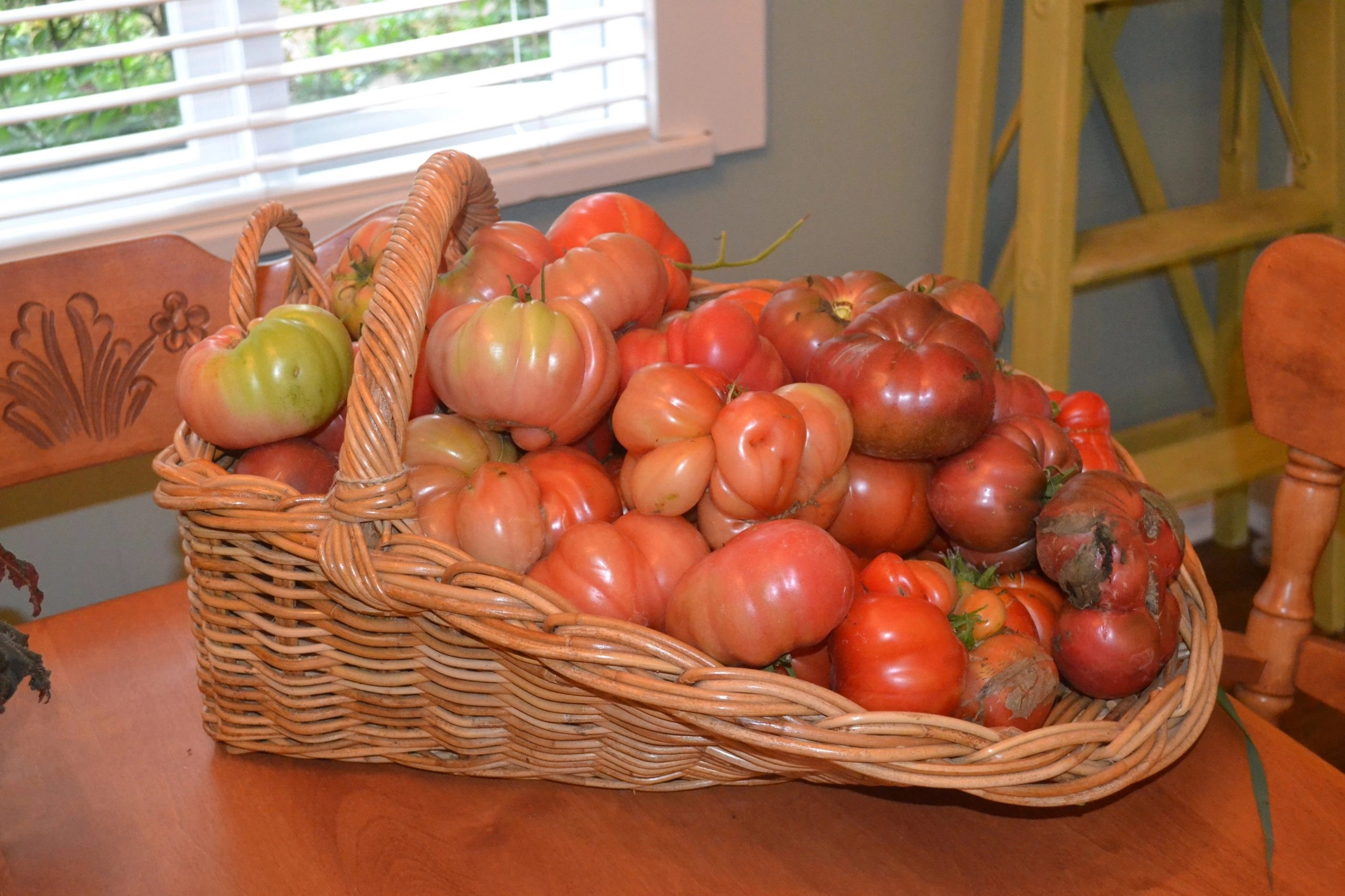 basket of tomatoes ready for freezing