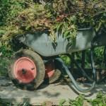 fall homesteading chores