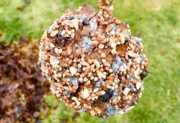 pine craft bird feeder