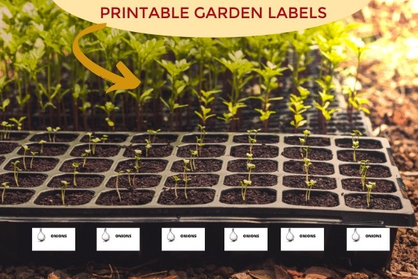 Onion Seeding tray with Printable Garden Labels sitting on soil