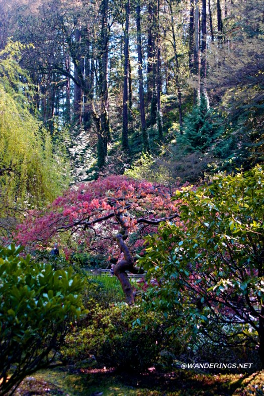 Portland Japanese Gardens ~ By Brent Zupp