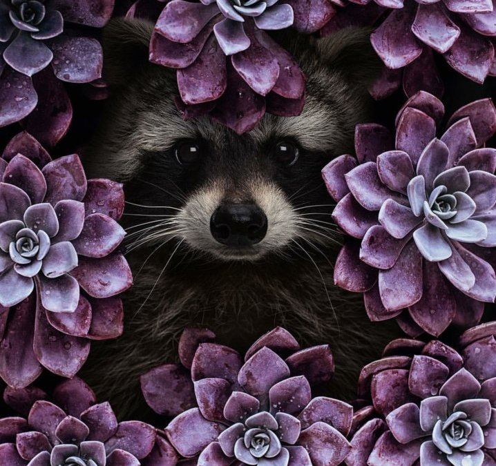 Trash Bandit in the Flowers