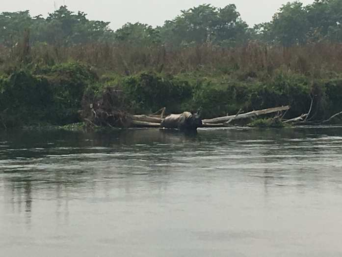 Rhino sighting in Chitwan National Park