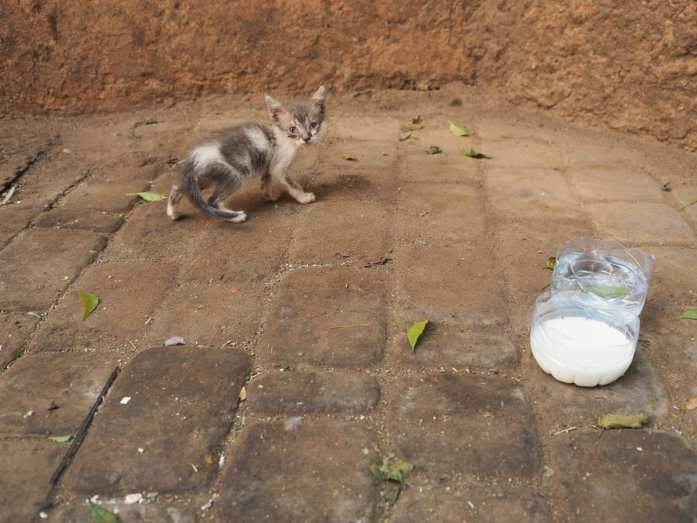 A small Morocco kitten