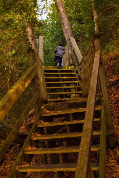 Boy walking up wooden stairs in the woods