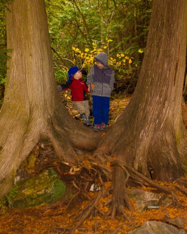 Two young brothers look at each other between two trees
