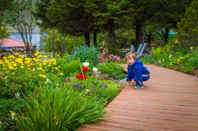 a young boy looks at colourful flowers in a garden