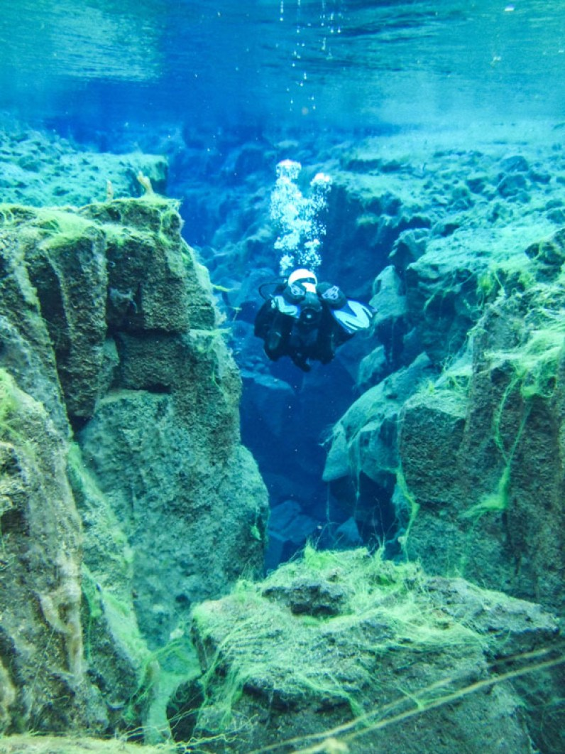 A SCUBA diver emerges from a crack covered in neon green foliage - Diving Iceland's Silfra