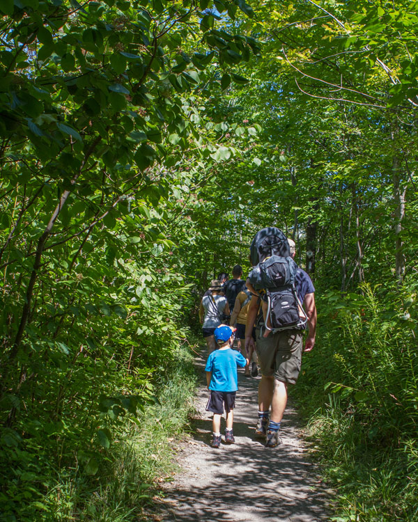 A father and son hiking through the woods - Limehouse Conservation Area