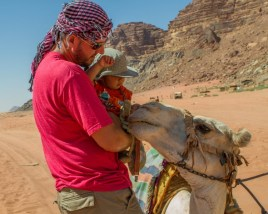 Father introduces infant to a camel in Wadi Rum