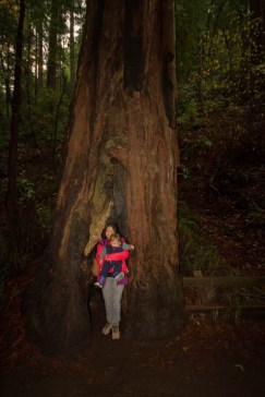 Women and son in front of giant Redwood at Muir Woods National Monumnet