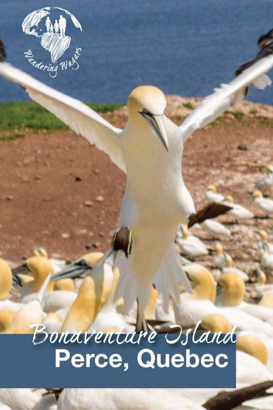 Bonaventure Island Perce Quebec - Pinterest