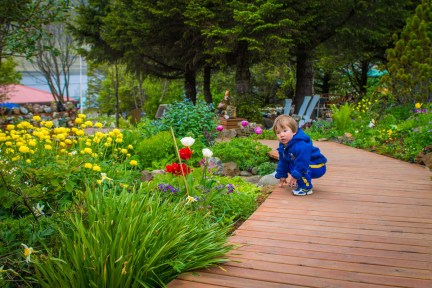 a young boy crouches over some flowers in a garden - An Epic 14 Day Iceland Itinerary