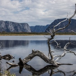 A gnarled log lies in a pond with a spectacular cliff backdrop in the distance