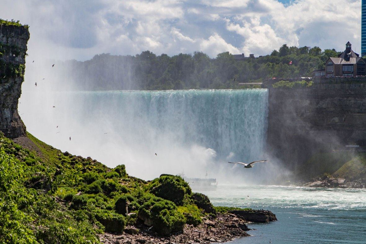 Birds fly over the lush bushes along the Niagara Falls shoreline while the horseshoe falls roars in the background - Exploring Niagara Falls