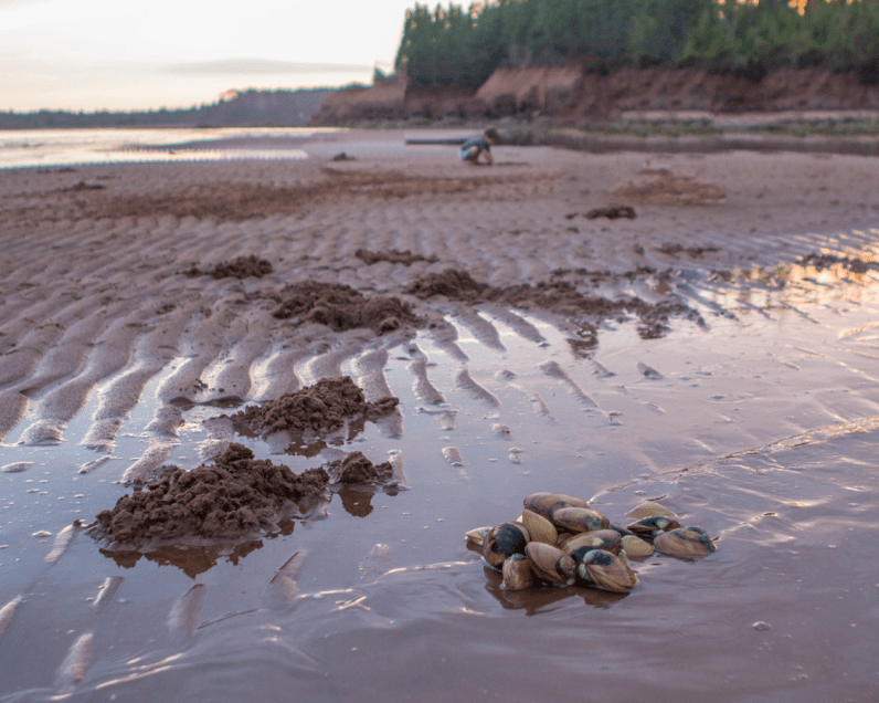 A pile of clams sits on the red sand of PEI