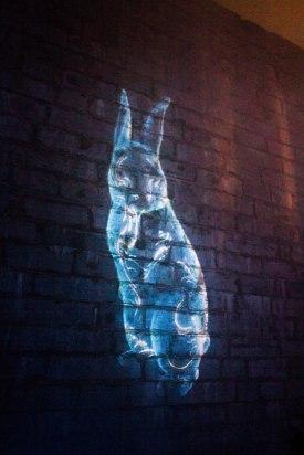 Bunny being projected on a wall at Lumina Borealis.