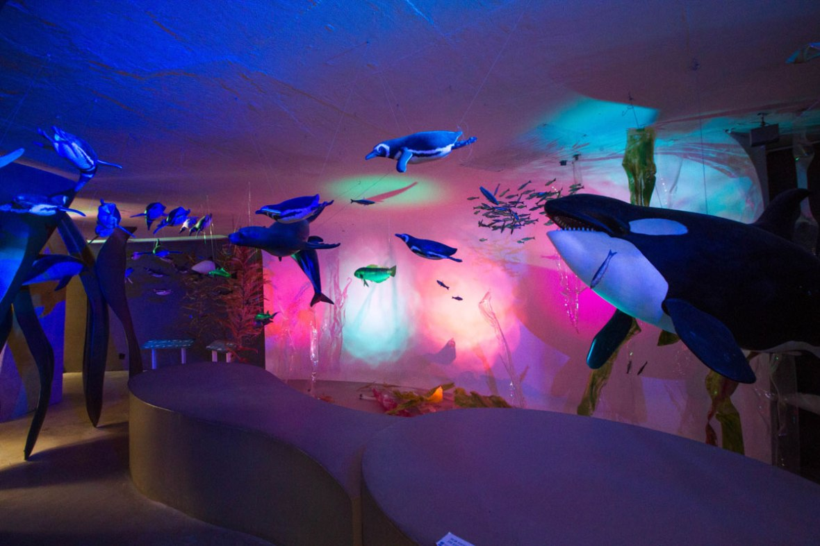 A museum display of underwater life near Punta Tombo, Argentina including penguins, killer whales, seals and more lit up by colourful lights