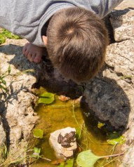 Boy watches a frog at from a trail at Sauble Falls. Provincial Park.