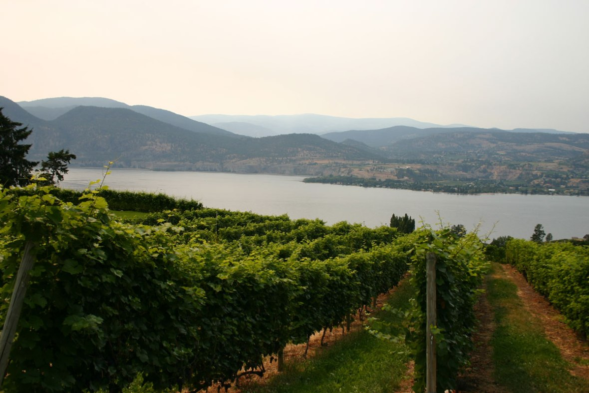 The orchards and wineries of the Okanagan Valley in British Columbia one of the most amazing places in Canada