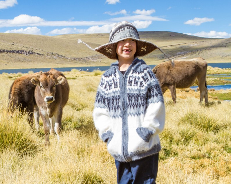 C of the Wandering Wagars searches for flamingos in the Peruvian Andes while some cows look at him on our way to visit the Andean Condors in Colca Canyon with kids