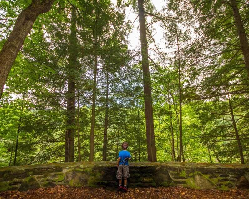 A young by looks into the forest in Letchworth State Park with kids in New York State