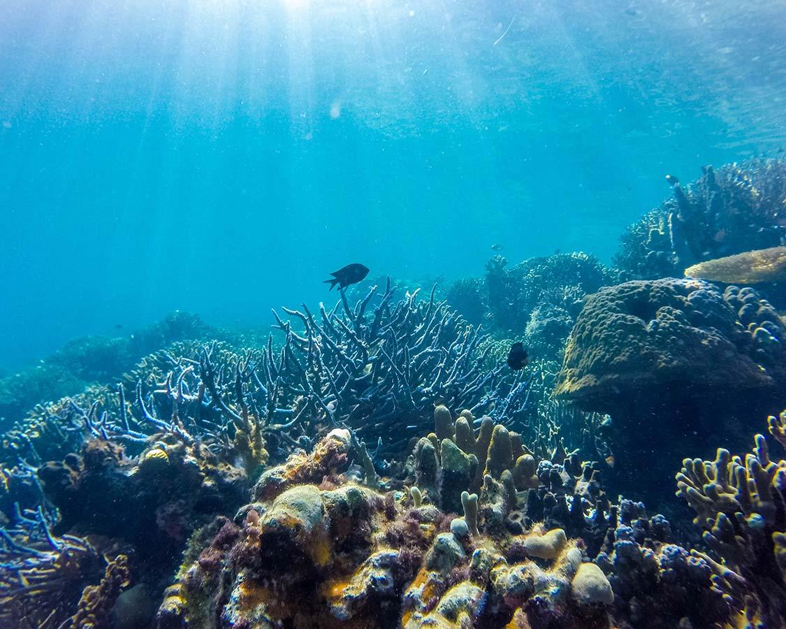 Coron coral reef SCUBA diving Sangat Island dive resort