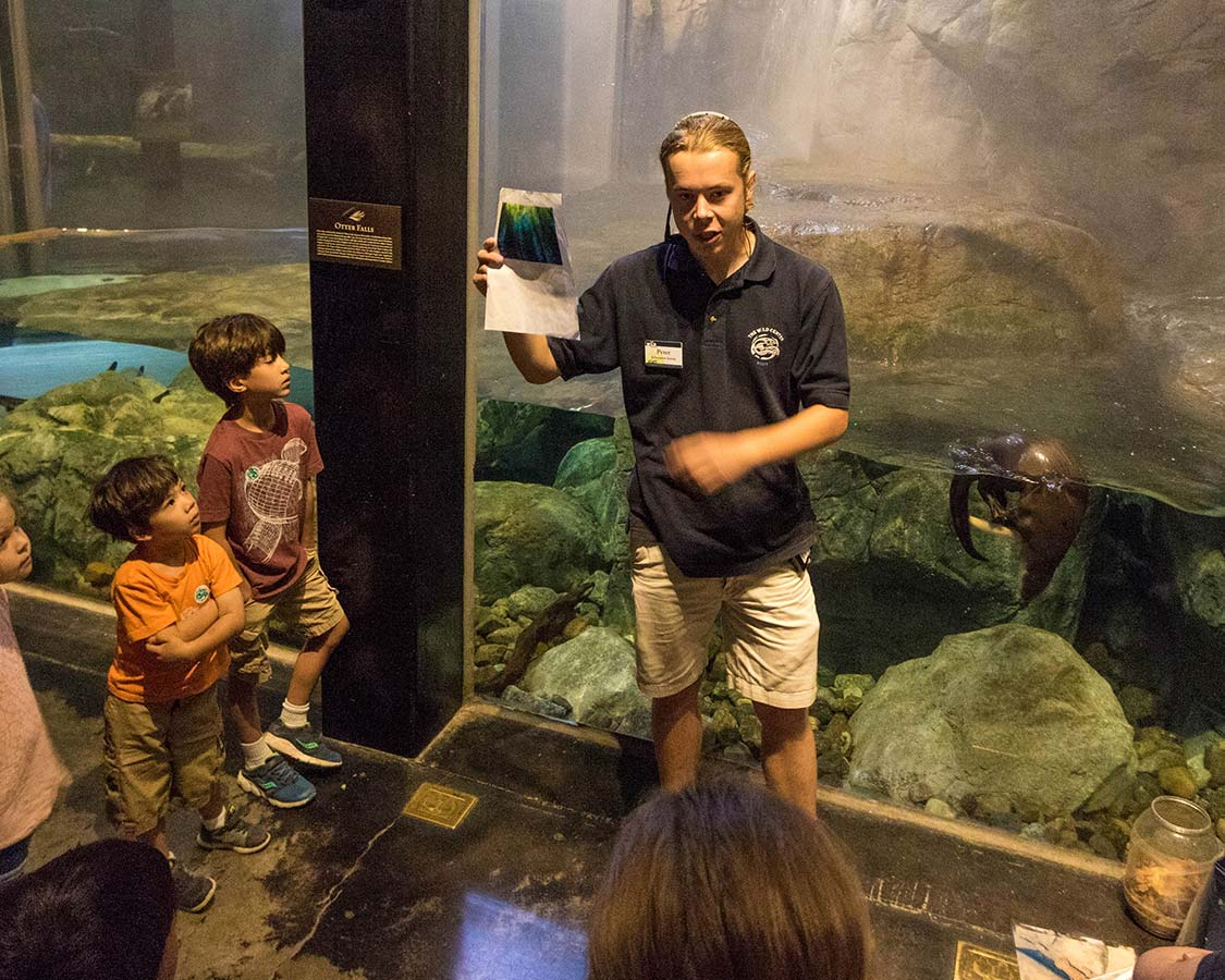 The Wild Center New York Otter Presentation
