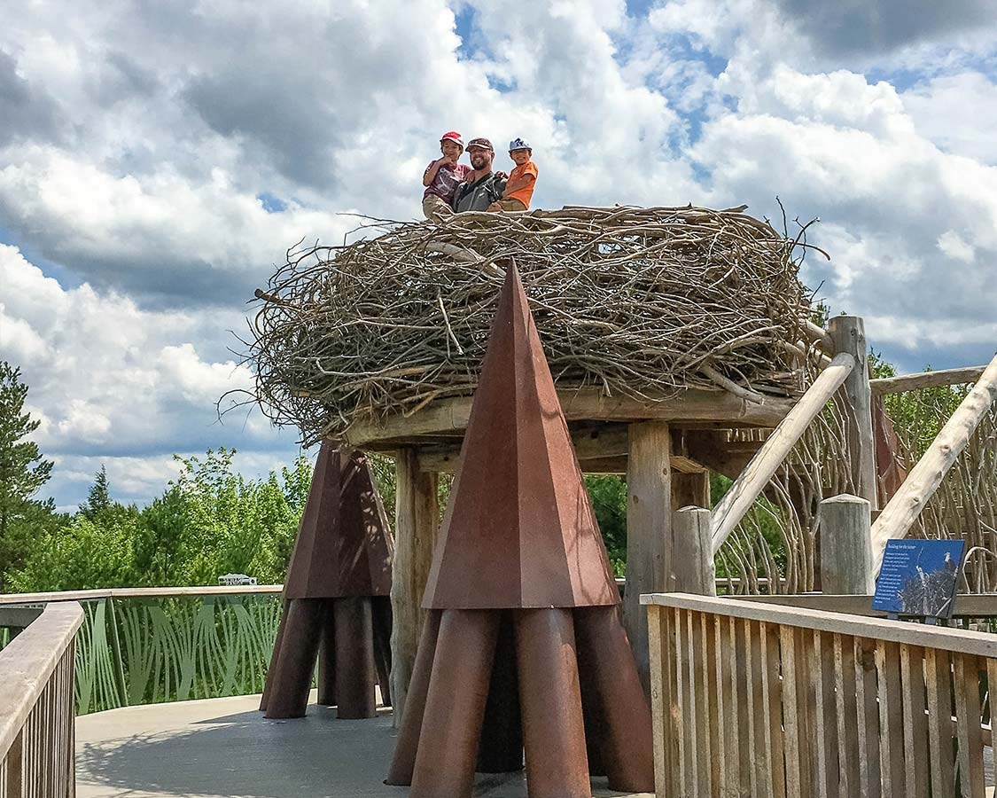 Things To Do in Lake Placid New York - Wild Walk at The Wild Center