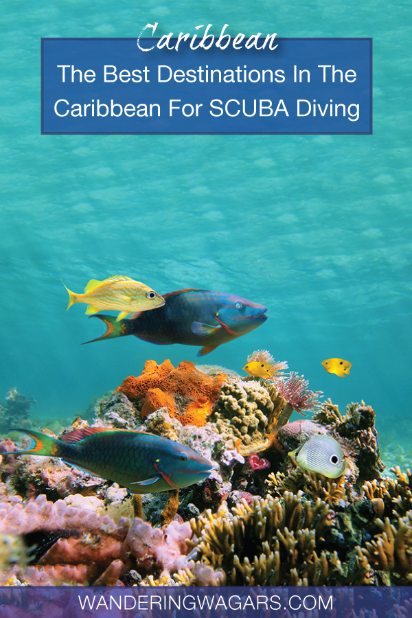 Best SCUBA Diving Destinations In The Caribbean For Families
