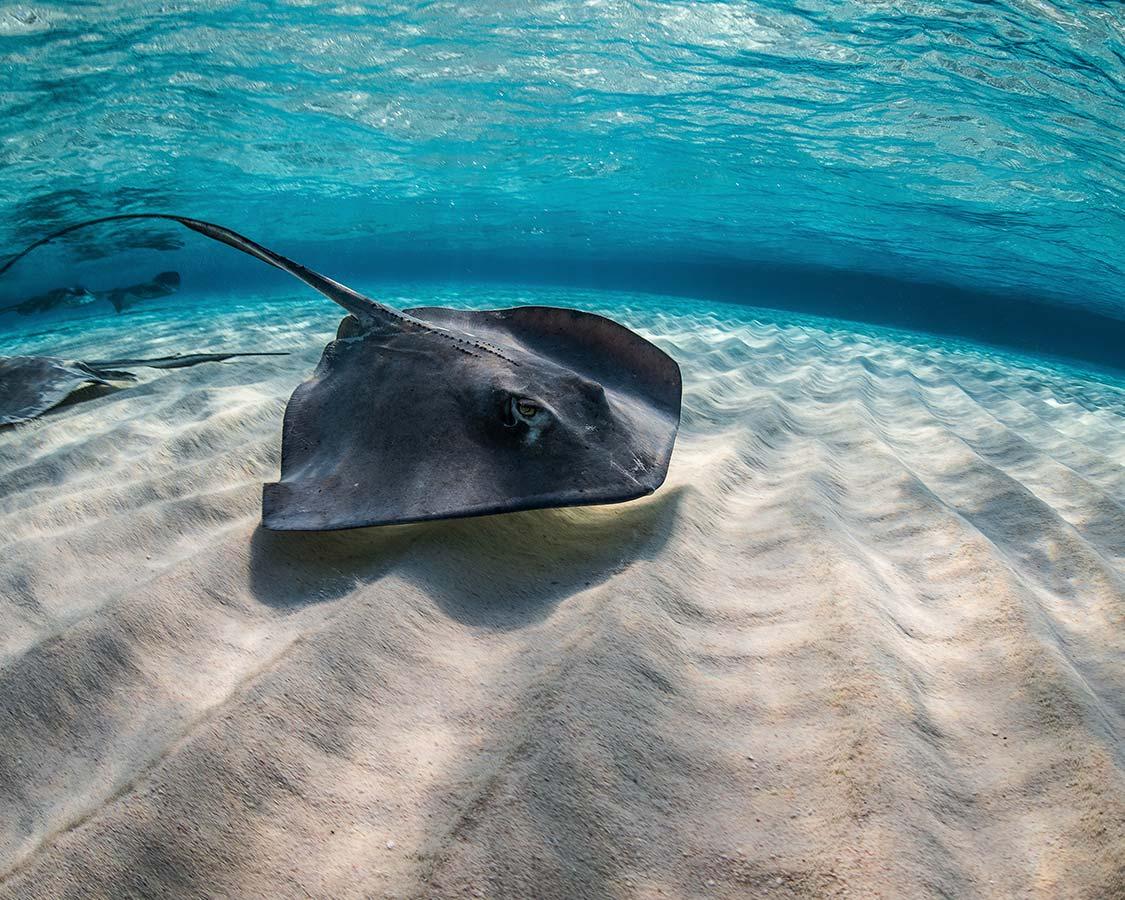Family SCUBA Diving Caribbean Stingray City Cayman Islands