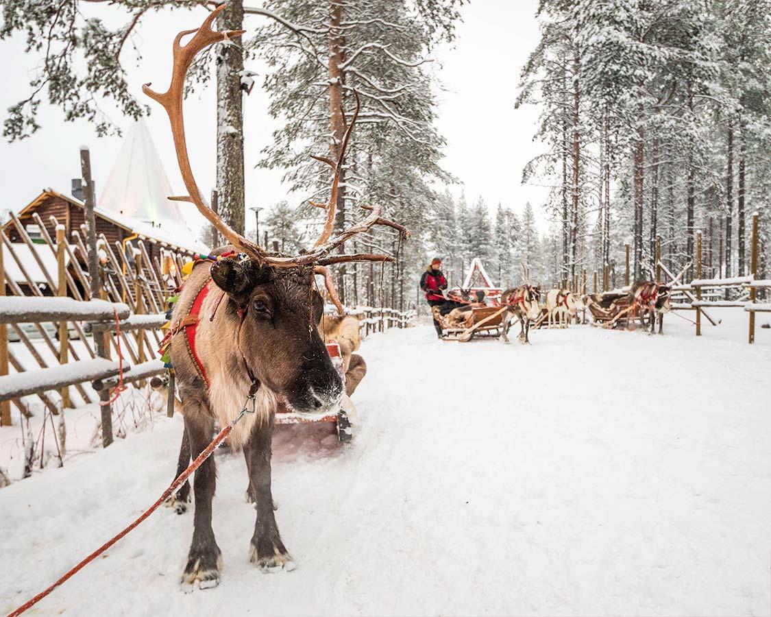 Santa-Claus-Reindeer-Ride-Rovaniemi