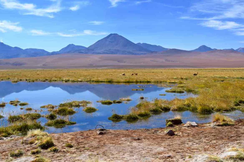 Lagoon on the way from El Tatio Geysers to San Pedro De Atacama