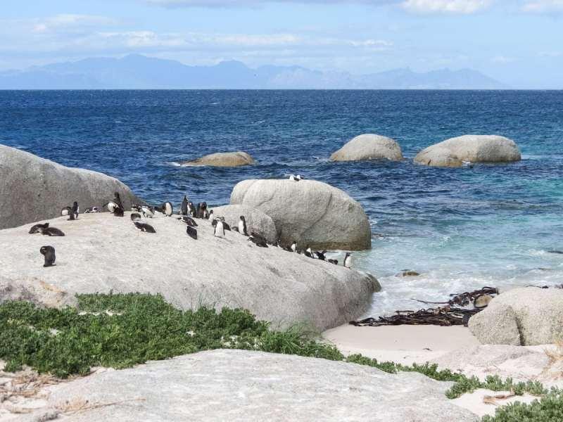 Penguins on Boulder's Beach, South Africa