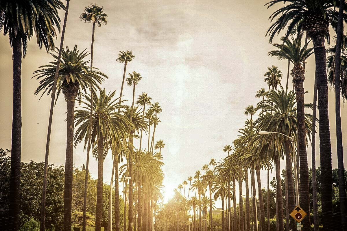 Palm tree lined roads in LA - a common view if you follow my Ultimate Los Angeles Itinerary