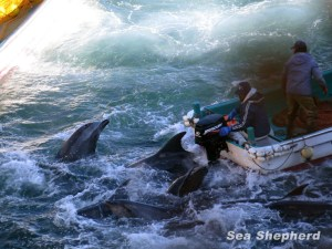 140119-Bottlenose-run-over-by-skiffs-IMG_2956