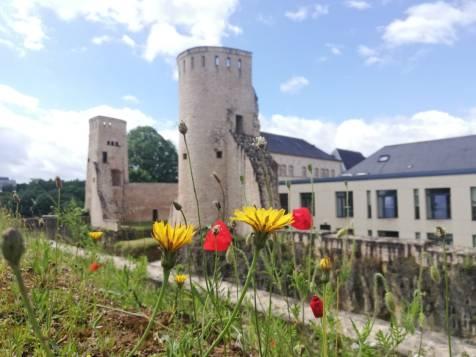 lussemburgo (61)