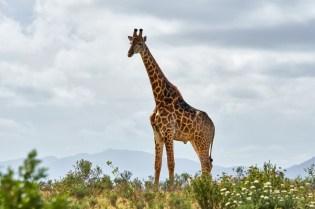 safari africa (1)