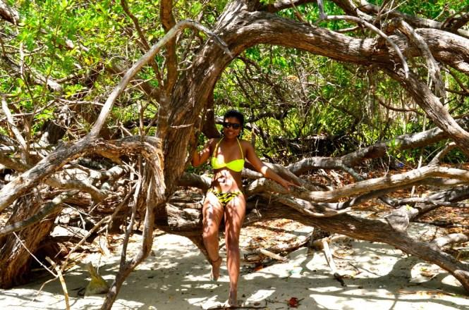 Mangroves Costa Rica