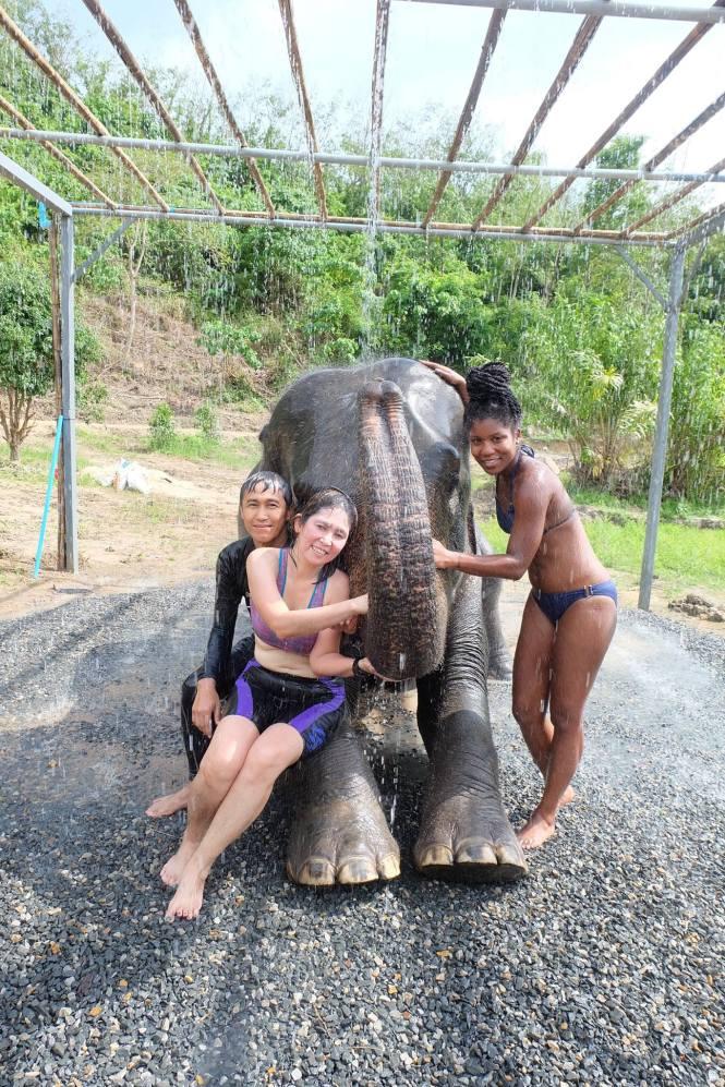 shower elephant jungle sanctuary