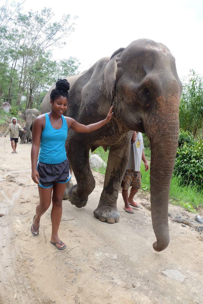 walking with elephants elephant jungle sanctuary