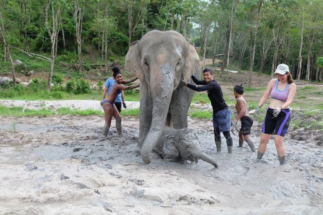 mud bath elephant jungle sanctuary