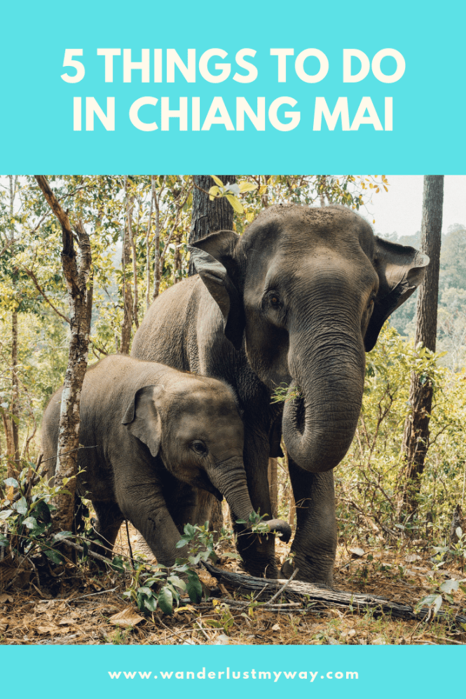Top 5 Things to Do in Chiang Mail