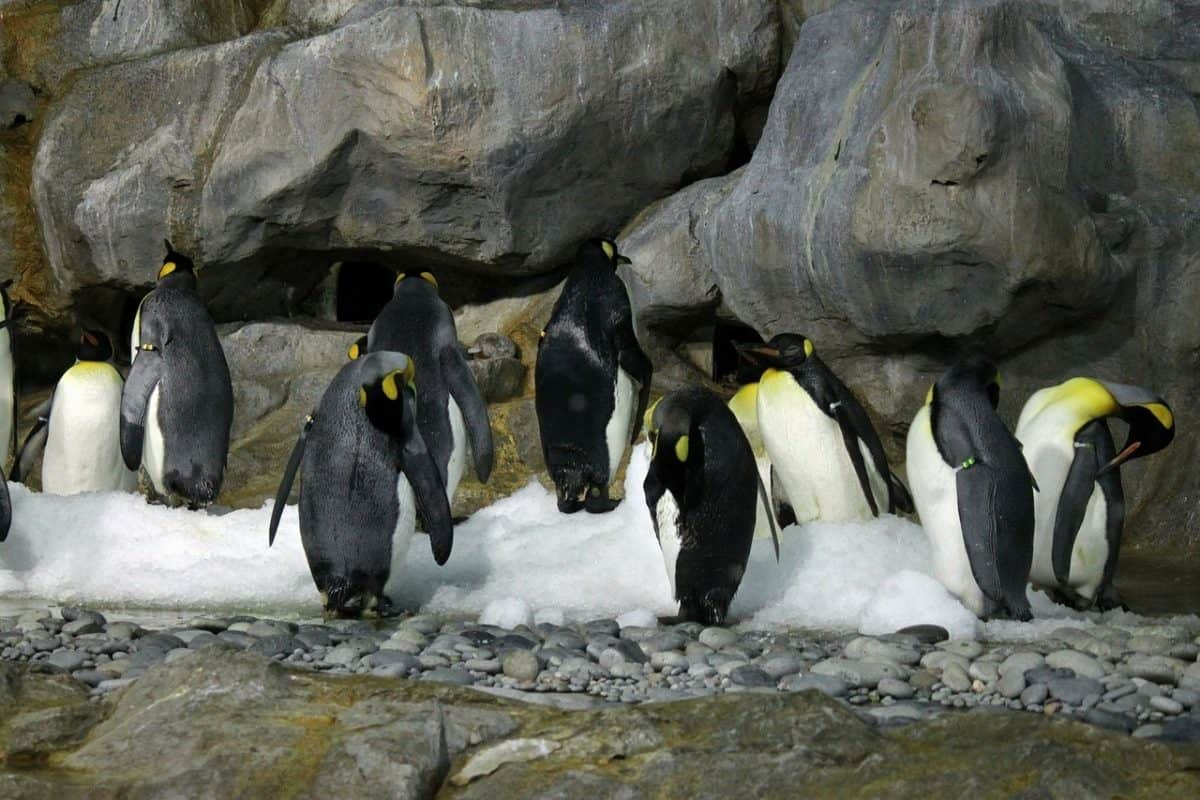 10 Fun Facts About Emperor Penguins