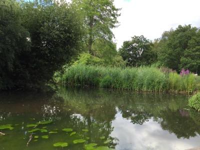 Pegs Pond at Isabella Plantation