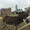 Donkeys outside Vauxhall City Farm