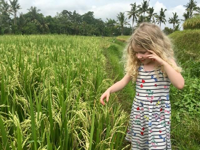 Bali: Rice paddies in Ubud