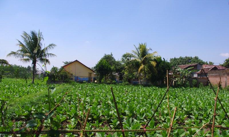 A school in rural Indonesia where I volunteered