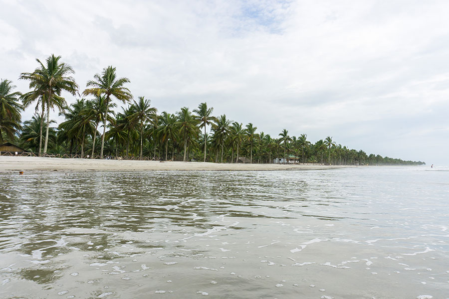 Row of palm trees on Isla Portete Beach